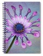 Sunscape Daisy Spiral Notebook