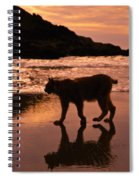 Sunset Stroll Spiral Notebook