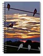 Sunsets And Birds Spiral Notebook