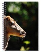 Sunshine Daydream Spiral Notebook