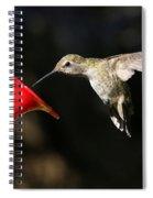 Sunshine On Hummingbird Spiral Notebook