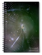 Sunshine On Swamp Spider Spiral Notebook