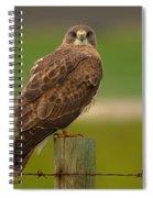 Swainsons Hawk Spiral Notebook
