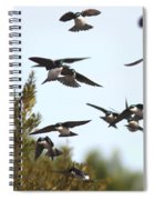 Swallows - All In The Family Spiral Notebook
