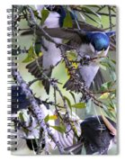 Swallows In Pooler Spiral Notebook