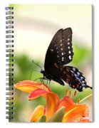 Swallowtail - Lite And Lively Spiral Notebook