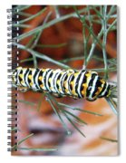 Swallowtail Caterpillar Spiral Notebook