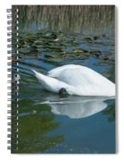 Swan With Cygnets Spiral Notebook