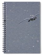Swans Coming In For A Landing, Tagish Spiral Notebook
