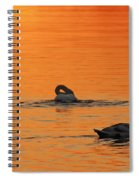 Swans In Early Light  Spiral Notebook