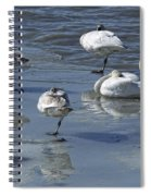 Swans On The Ice Along The Tagish Spiral Notebook
