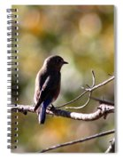 Sweet And Peaceful Spiral Notebook