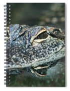 Sweet Baby Alligator Spiral Notebook