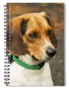 Sweet Little Beagle Dog Spiral Notebook