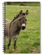 Sweet Little Donkey Spiral Notebook