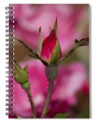 Sweet Little Rosebud Spiral Notebook