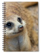 Sweet Meerkat Face Spiral Notebook