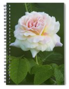 Sweet Morning Peace Rose Spiral Notebook