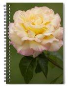 Sweet Peace Rose Spiral Notebook