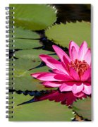 Sweet Pink Water Lily In The River Spiral Notebook