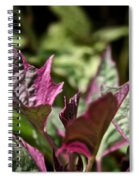Sweet Potato Vine Spiral Notebook