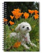 Sweet Sunshine Spiral Notebook