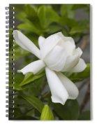 Sweet Sweet Gardenia Spiral Notebook