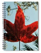 Sweetgum Spiral Notebook