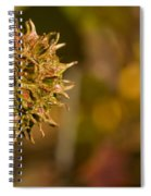 Sweetgum Seed Pod Spiral Notebook