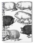 Swine, 1876 Spiral Notebook