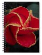 Swirling Star Spiral Notebook