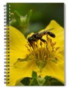 Syritta Pipiens Spiral Notebook