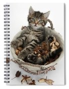 Tabby Kitten In Potpourri Basket Spiral Notebook