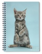 Tabby Kitten Sitting Up Spiral Notebook