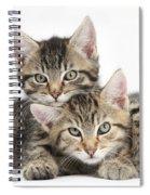 Tabby Kittens Cuddling Spiral Notebook