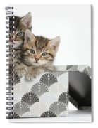 Tabby Kittens In Gift Box Spiral Notebook
