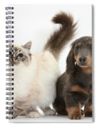Tabby-point Birman And Dachshund Pup Spiral Notebook