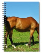 Tail Swatting Flies Spiral Notebook