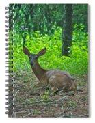 Taking A Break 7388 1776 Spiral Notebook