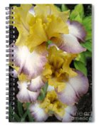 Tall Bearded Iris Named Butterfingers Spiral Notebook