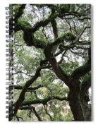 Tampa Trees Spiral Notebook