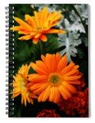Tangerine Colored Gerbera Daisies Spiral Notebook