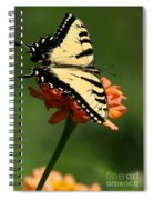 Tantalizing Tiger Swallowtail Butterfly Spiral Notebook