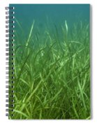 Tapegrass In Freshwater Lake Spiral Notebook