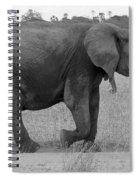 Tarangire Elephant On Road Spiral Notebook