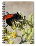 Tarantula Hawk Wasp Spiral Notebook