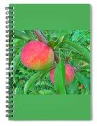 Tasty Organic Plums Spiral Notebook