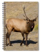 Tasty Visitor Spiral Notebook
