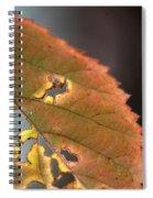 Tattered Leaf Spiral Notebook
