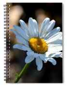 Tea Stained Daisy Spiral Notebook